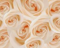 Чарівність троянд - частина 1 Краса Природи, Природа, Квіти, Троянди, Білі троянди, Рожеві троянди, Любов / Кохання id543596416
