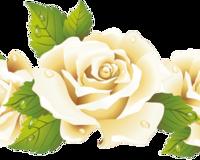 Чарівність троянд - частина 2 Ніжність, Краса, Природа, Квіти, Троянди, Білі троянди, Рожеві троянди, Любов / Кохання id1046170026