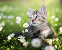 Kittens - Part 3  1131611607