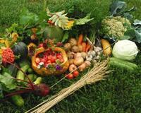 Витамины и лето - часть 2 Природа, Еда, Позитив, Здоровье, Питание, Сад, Фрукты, Овощи, Лето, Витамины id880688040