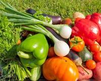 Vitamins and Summer - Part 2  620359168