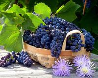 Vitamins and Summer - Part 7  1760788968