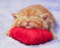Позитивні емоції - частина 2 Природа, Тварини, Кіт, Кішка, Коти, Любов, Позитив, Емоції, Кошик, Царство Природи id684443474