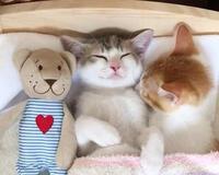 Позитивні емоції - частина 4 Природа, Тварини, Кіт, Кішка, Коти, Любов, Позитив, Емоції, Кошик, Царство Природи id1261756678