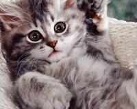 Позитивні емоції - частина 5 Природа, Тварини, Кіт, Кішка, Коти, Любов, Позитив, Емоції, Кошик, Царство Природи id1382652283
