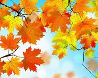Краса вересня - частина 2 Природа, Осінь, Дерева, Листя, Сонце, Гори, Позитив, Небо, Ліс, Царство Природи id1612083911