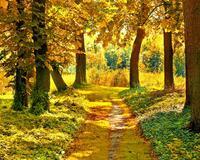 Краса вересня - частина 2 Природа, Осінь, Дерева, Листя, Сонце, Гори, Позитив, Небо, Ліс, Царство Природи id1386562503