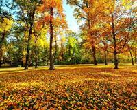 Краса вересня - частина 3 Природа, Осінь, Дерева, Листя, Сонце, Гори, Позитив, Небо, Ліс, Царство Природи id251520109