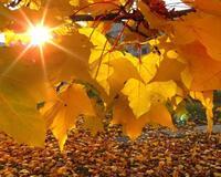 Краса жовтня - частина 2 Природа, Осінь, Жовтень, Дерева, Парк, Схід, Сонце, Вода, Листя, Небо id392690888