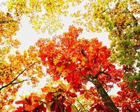 Краса жовтня - частина 3 Природа, Осінь, Жовтень, Дерева, Парк, Схід, Сонце, Вода, Листя, Небо id312063659