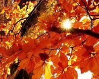 Краса жовтня - частина 3 Природа, Осінь, Жовтень, Дерева, Парк, Схід, Сонце, Вода, Листя, Небо id294980345