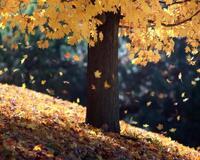 Краса жовтня - частина 4 Природа, Осінь, Жовтень, Дерева, Парк, Схід, Сонце, Вода, Листя, Небо id648191175