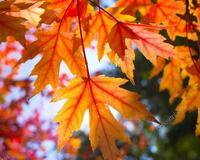 Краса жовтня - частина 5 Природа, Осінь, Жовтень, Дерева, Парк, Схід, Сонце, Вода, Листя, Небо id1582960218