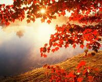 Краса жовтня - частина 5 Природа, Осінь, Жовтень, Дерева, Парк, Схід, Сонце, Вода, Листя, Небо id1826959797