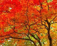 Краса жовтня - частина 6 Природа, Осінь, Жовтень, Дерева, Парк, Схід, Сонце, Вода, Листя, Небо id1385010086