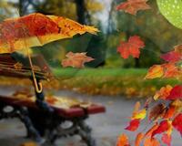 Краса жовтня - частина 8 Природа, Осінь, Жовтень, Дерева, Парк, Схід, Сонце, Вода, Листя, Небо id1913859460