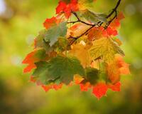Краса жовтня - частина 9 Природа, Осінь, Жовтень, Дерева, Парк, Схід, Сонце, Вода, Листя, Небо id492362309