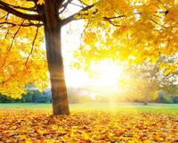 Краса жовтня - частина 10 Природа, Осінь, Жовтень, Дерева, Парк, Схід, Сонце, Вода, Листя, Небо id961620253