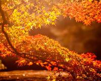 Краса жовтня - частина 10 Природа, Осінь, Жовтень, Дерева, Парк, Схід, Сонце, Вода, Листя, Небо id1299414771