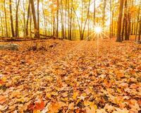 Краса жовтня - частина 12 Природа, Осінь, Жовтень, Дерева, Парк, Схід, Сонце, Вода, Листя, Небо id650472955
