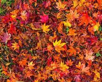 Краса жовтня. Пори року. Золота осінь Природа, Осінь, Жовтень, Дерева, Парк, Схід, Сонце, Вода, Листя, Небо id79538919