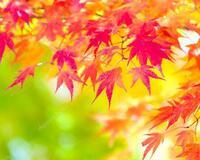 Краса жовтня - частина 16 Природа, Осінь, Жовтень, Дерева, Парк, Схід, Сонце, Вода, Листя, Небо id166740362