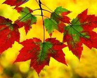 Краса жовтня - частина 16 Природа, Осінь, Жовтень, Дерева, Парк, Схід, Сонце, Вода, Листя, Небо id881857442