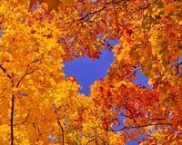 Краса жовтня - частина 16 Природа, Осінь, Жовтень, Дерева, Парк, Схід, Сонце, Вода, Листя, Небо id1157626273