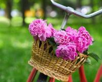 Весна. Травень. Пори року. Прикмети Природа, Квіти, Весна, Травень, Соловей, Прикмети, Сонце, Птахи, Трава, Пори року id1981487309