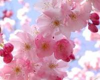 Весна. Травень. Пори року. Прикмети Природа, Квіти, Весна, Травень, Соловей, Прикмети, Сонце, Птахи, Трава, Пори року id921745344