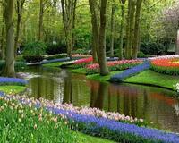Знайомства Нідерланди. Королівський парк  Цікаві місця для побачень, Нідерланди, Квіти, Парк, Знайомства, Дві Зірки, 12dz.com id2023256044