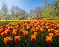 Dating Netherlands. Garden of Europe - Keukenhof Цікаві місця для побачень, Netherlands, Flowers, Park, Dating, Dvi Zirky, 12dz.com id1534156523