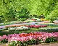 Dating Netherlands. Garden of Europe - Keukenhof Цікаві місця для побачень, Netherlands, Flowers, Park, Dating, Dvi Zirky, 12dz.com id1322555014