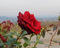 Знайомства Черкаси. Долина троянд - Сонячний годинник «Птах» Цікаві місця для побачень, Природа, Парк, Троянди, Сонячний годинник id2144963468