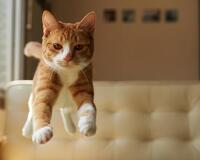 Чи варто заводити кота? - частина 3 Природа, Тварини, Кіт, Кішка, Коти, Любов, Позитив, Емоції, Найгарніші ФотоШпалери, ФотоШпалери на робочий стіл id708875221