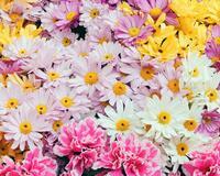 Чарівні квіти ромашки Любов, Кохання, Царство Природи, Природа, Ромашки, Позитив, Каталог Сайтів id1184094980