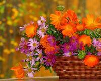Цветы. Волшебная осень.  Природа, Цветы, Позитив, Каталог Сайтов, Осень id1607919108