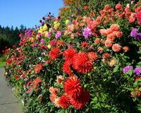 Цветы. Волшебная осень.  Природа, Цветы, Позитив, Каталог Сайтов, Осень id1928699630