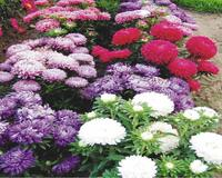 Flowers. Magic autumn.  Природа, Flowers, Positive, Site Directory, Autumn id1903069117