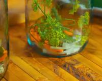 Хрусткі мариновані огірки на зиму id252930098