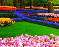 Знайомство Нідерланди - Королівський парк квітів - Кекенхоф id1653735808