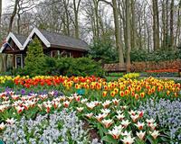 Знайомство Нідерланди - Королівський парк квітів - Кекенхоф id1900258980