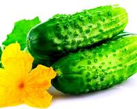 """Lightly salted cucumbers """"quick in the package"""" id476489467"""