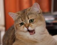 Причини завести пухнастого улюбленця - котика id1314800690