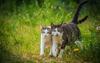 Притча про мудру кішку id400729918