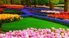 Знайомство Нідерланди - Королівський парк квітів - Кекенхоф id1758983649